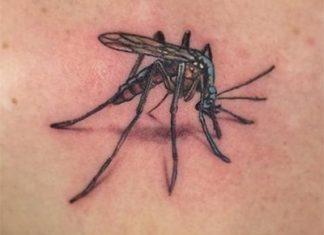 Szúnyog